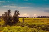 Prado grande com ervas da montanha e algumas árvores de folha caduca e arbustos em primeiro plano. nuvens sobre o maciço montanhoso, embora em segundo plano. bom tempo em um dia de bom verão — Fotografia Stock