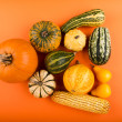 Pumpkins isolated on orange background — Stockfoto #56990791