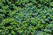 Green bush  — Stockfoto