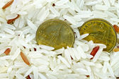Money concept ,Coins in grain rice — Stock fotografie