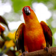 One conures parrots are sitting on a tree branch and look at the — Stock Photo #56593507