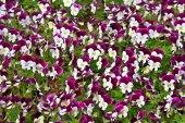 Vacker blomma i trädgården — Stockfoto