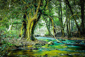 Small river in the forest — Stock Photo