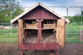 Chiсken's coop — Stock Photo
