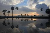 Colorful sunrise landscape with silhouettes of palm trees on Cha — Stock Photo