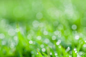Defocused abstract fresh green natural background — Stock Photo