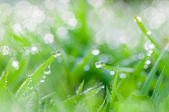 Fresh green grass with dew drops natural background — Foto Stock
