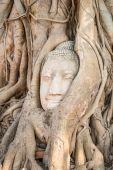 Vedoucí z pískovce buddha v kořenech stromu na wat mahathat templ — Stock fotografie