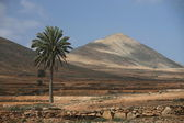 EUROPE CANARY ISLANDS FUERTEVENTURA — Stock Photo