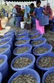 Shrimp farm in the Khao Sam Roi Yot National park — Stock Photo