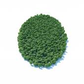Circle forest — Stock Photo