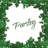Parsley on a white background. Vector green frame of greenery. — Vetorial Stock