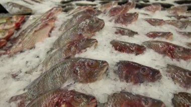 Closeup of Fresh Fish on Ice in Fish Market — Stock Video