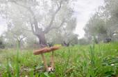 Fungus in lawn — Stock Photo