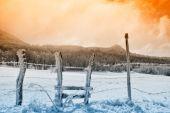 Płot pokryte lodem — Zdjęcie stockowe