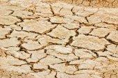 Arid soil — Stock Photo