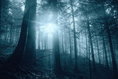 Mystical forest — Stock Photo