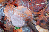 Leaves with frost — Stock Photo
