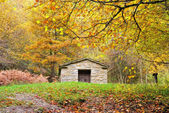 Old refuge in the forest — Stock Photo