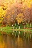 Forest reflex in the lake — Stock Photo