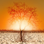 Caco tree in winter — Stock Photo #55483403