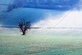 Isolada no vale de pêssego — Fotografia Stock