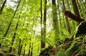 Fern in the underwood — Foto Stock