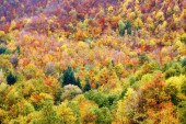 Colored forest in autumn — Stock Photo