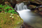 Waterfall in the undergrowth — Stock Photo