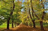 Straße mit bäumen — Stockfoto