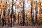 Forest colored — Stock Photo