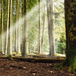 Sunbeam into the forest — Stock Photo #58569623