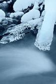 Frosted branch in winter — Zdjęcie stockowe