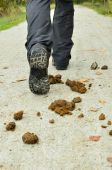 Feces on the road — Stock Photo