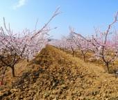 Drzewa owocowe — Zdjęcie stockowe