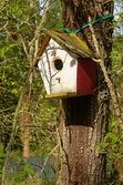 Home for birds — Stock Photo