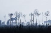 Spálené stromy — Stock fotografie