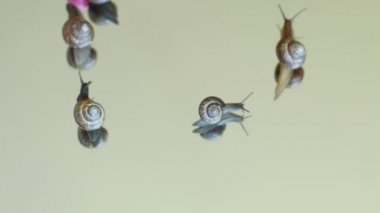 Funny amazing  snails play with ball time lapse composition 1 — Stock Video