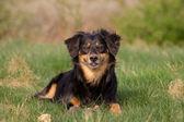 Cute Dog Portrait — Stock Photo