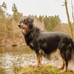 Dog Portrait — Stock Photo #55596693
