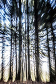 Trees Background — Stock Photo