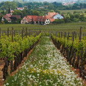 Wine Route in Alsace. Views of the vineyards. — Stock Photo