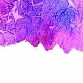 Fundo de aquarela grunge texturizada azul e violeta, com espaço de cópia — Vetor de Stock