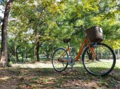 Bicycle in park — Stockfoto