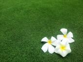 Beautiful Flower — Photo