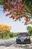 Roadside colorful peacock tree flower — Stock Photo