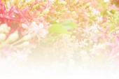 Beautiful flowers soft focus and bright light — Stock Photo