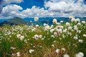 Fluffy grass — Stock Photo