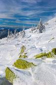 Kış Karpatlar — Stok fotoğraf