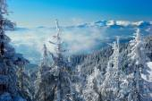 Winter forest in the mountains — Stock Photo